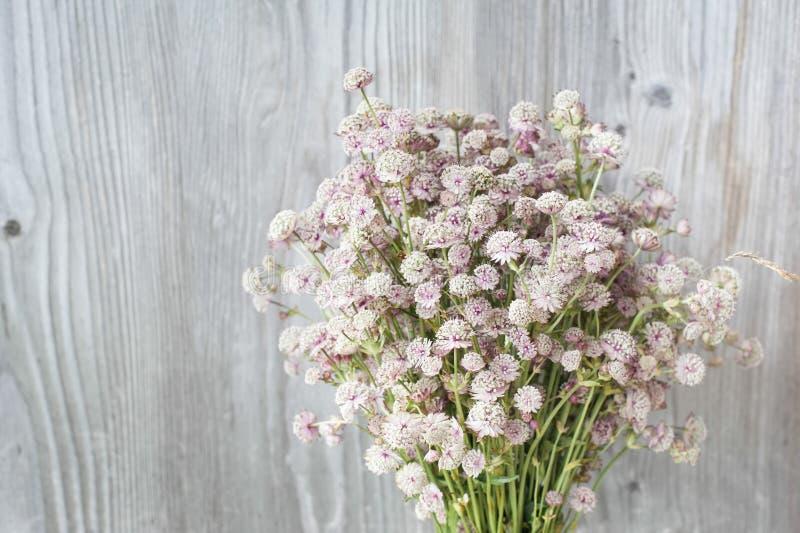 Le beau bouquet tendre du pré d'été fleurit sur le dos en bois image stock