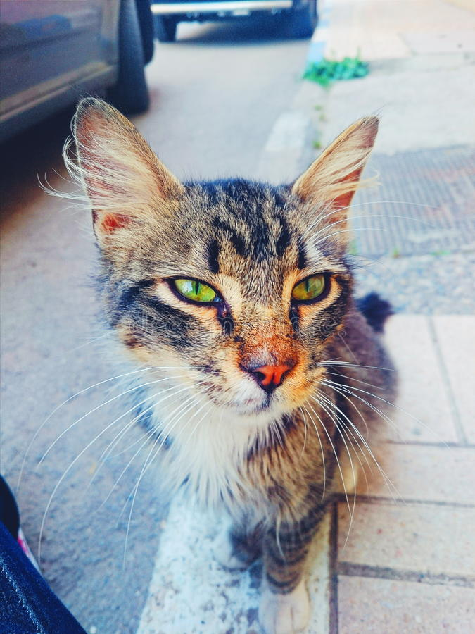 Le beau chat photographie stock