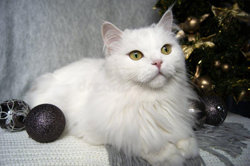 Le beau chat blanc avec les yeux verts se trouve sur une écharpe grise sur le fond d'un arbre de Noël et des décorations de vacan photos libres de droits