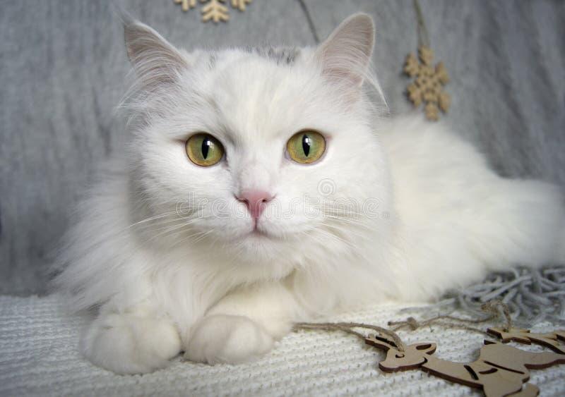 Le beau chat blanc avec les yeux verts se trouve sur une écharpe grise sur le fond d'un arbre de Noël et des décorations de vacan photo libre de droits