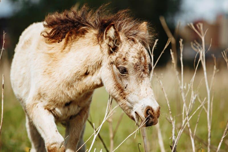 Le beau cheval mange l'herbe dans le domaine images stock