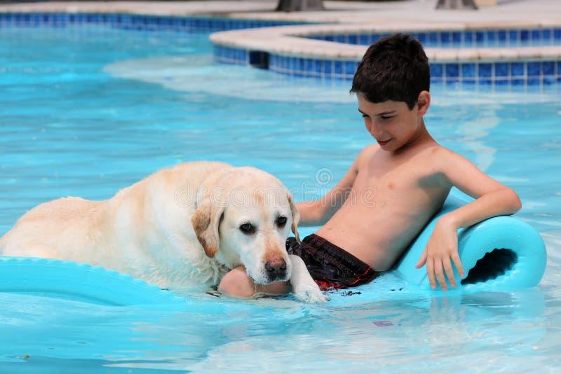Le beau chien et le garçon uniques de Labrador de golden retriever détendant à la piscine dans un lit de flottement, poursuivent  photo libre de droits
