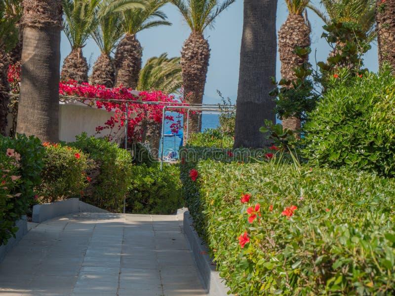 Le beau colourfull se d?veloppent des fleurs en ?le grecque photos stock