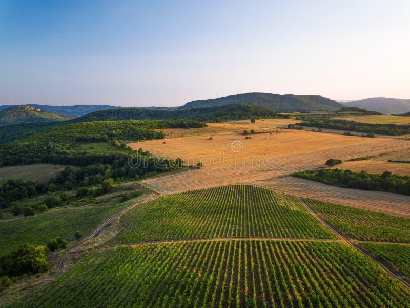 Le beau coucher du soleil au-dessus du vignoble met en place en Europe, vue aérienne photographie stock
