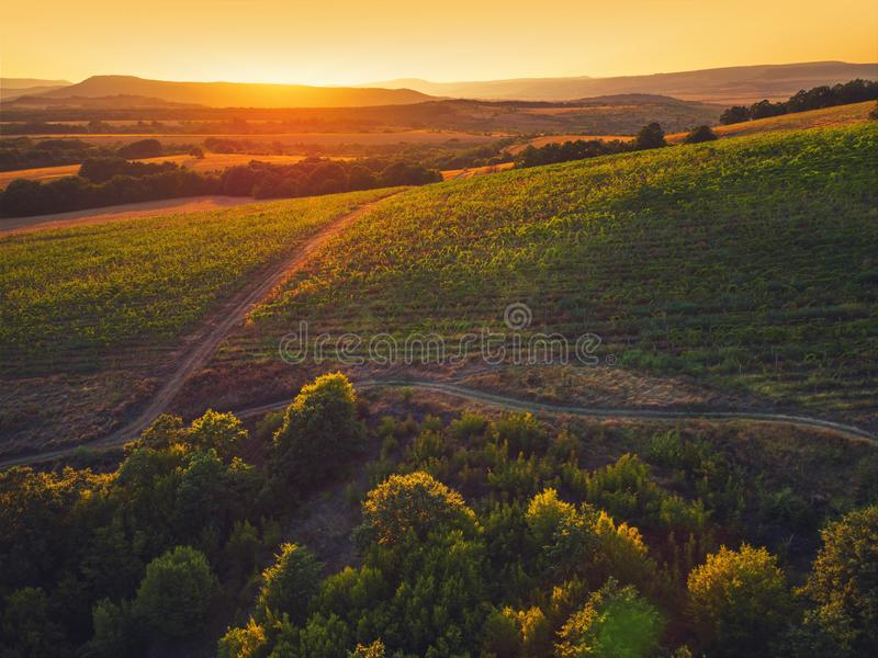 Le beau coucher du soleil au-dessus du vignoble met en place en Europe, vue aérienne photographie stock libre de droits