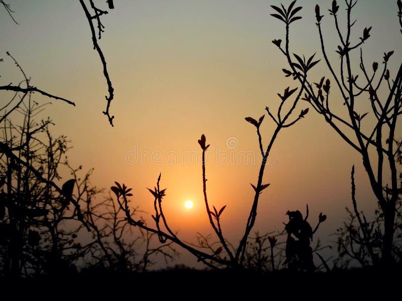 Le beau coucher du soleil avec l'arbre noir et le ciel wallpaper photos libres de droits