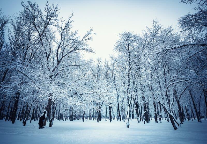 Le beau fond de paysage d'hiver avec la neige a couvert les arbres et la glace photos stock