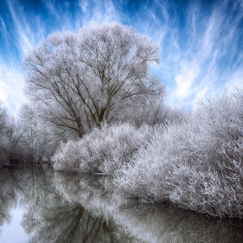 Le beau fond de scène de paysage d'hiver avec la neige a couvert le TR images libres de droits
