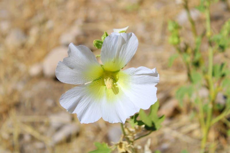 Le beau grand bacground est la fleur blanche d'été de tache floue photos libres de droits