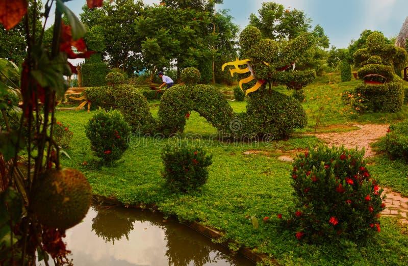 Le beau jardin asiatique avec la forme de dragon a coupé le buisson image stock