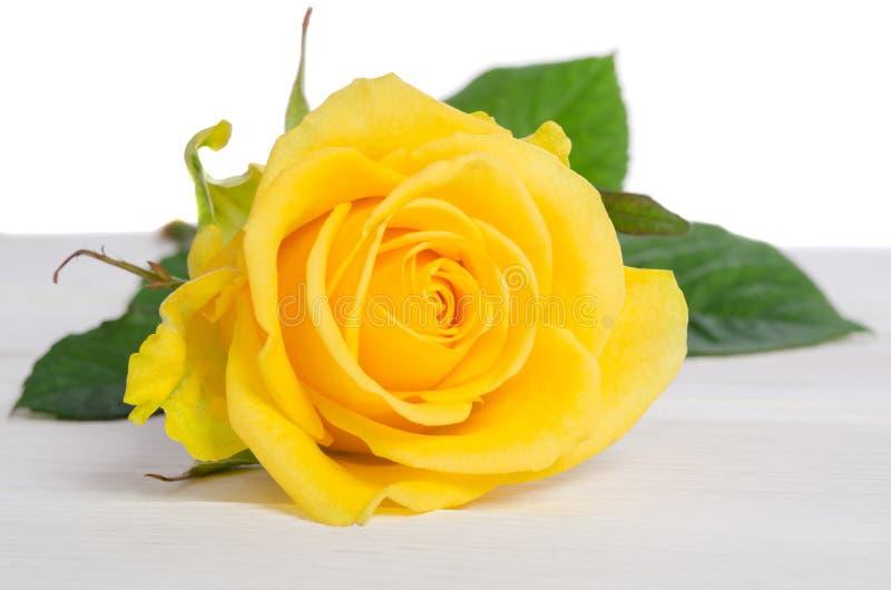 Le beau jaune a monté photos stock