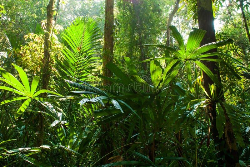Le beau lever de soleil brille vers le bas sur la forêt de marais de tourbe au marais Forest Nature Research de tourbe de Sirindh photos libres de droits