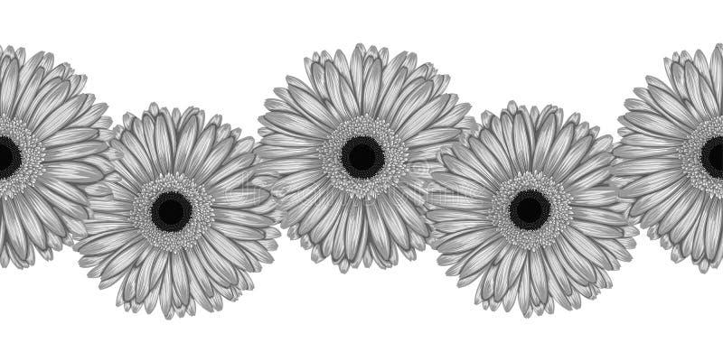 Le beau monochrome, élément horizontal sans couture noir et blanc de cadre de gerbera gris fleurit illustration libre de droits