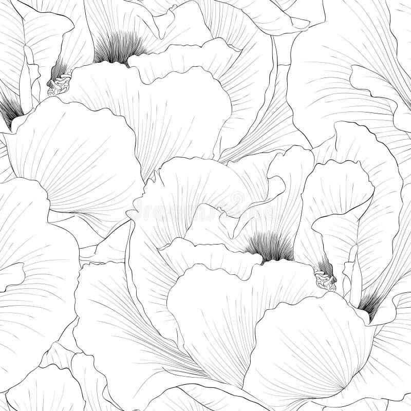 Le beau monochrome, fond sans couture noir et blanc avec des fleurs plantent l'arborea de Paeonia (la pivoine d'arbre) illustration stock