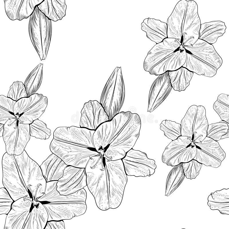 Le beau monochrome, sans couture noir et blanc de la ligne noire et blanche lis fleurit illustration libre de droits