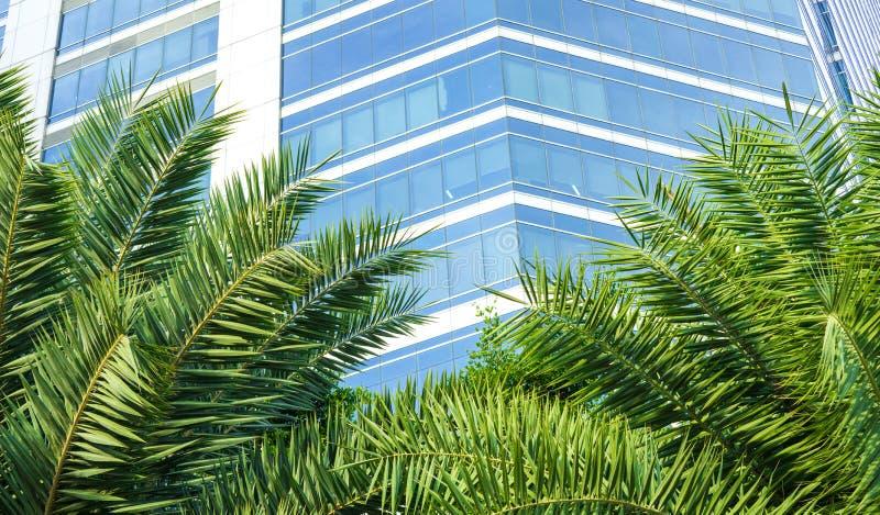 Le beau palmier part avec le fond de bâtiment de bureau municipal avec l'espace de lumière du soleil et de copie photo libre de droits