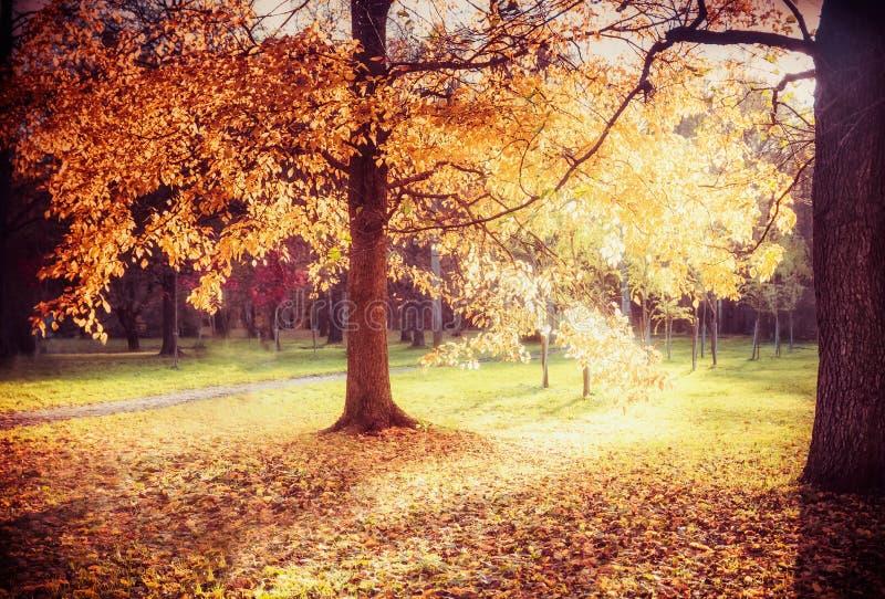 Le beau paysage d'allée d'automne avec le feuillage d'automne coloré des arbres, automne des textes de lumière du soleil venant,  image libre de droits