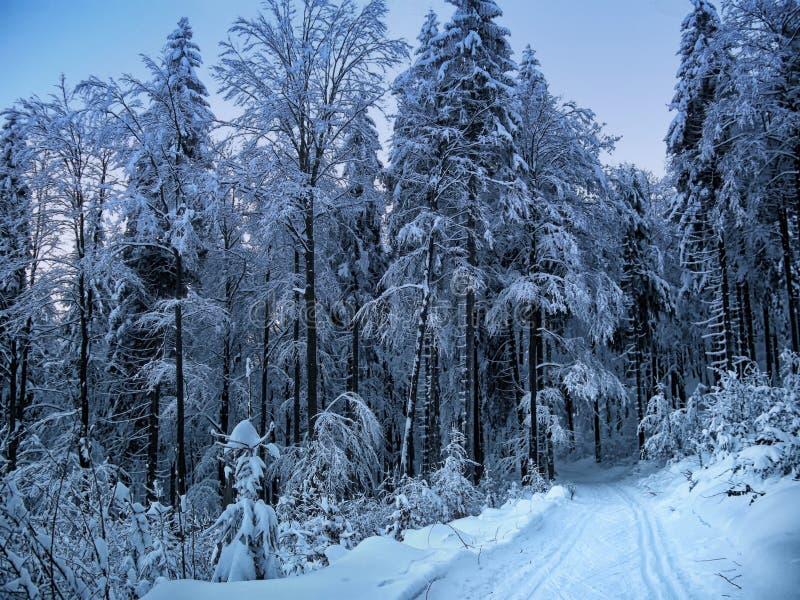 Le beau paysage d'hiver avec la neige a couvert des arbres photographie stock libre de droits