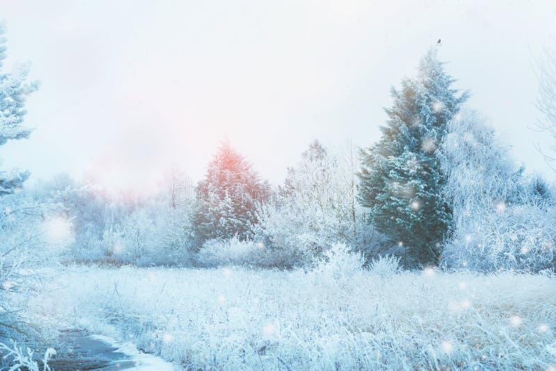 Le beau paysage d'hiver avec la neige a couvert les arbres, le champ d'herbe, les sapins lumière du soleil et les chutes de neige image stock