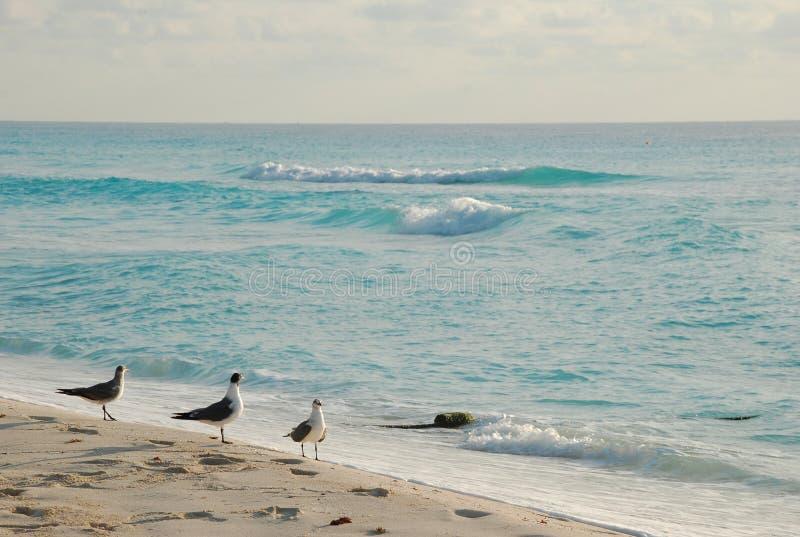 Le beau paysage de bord de la mer photos stock