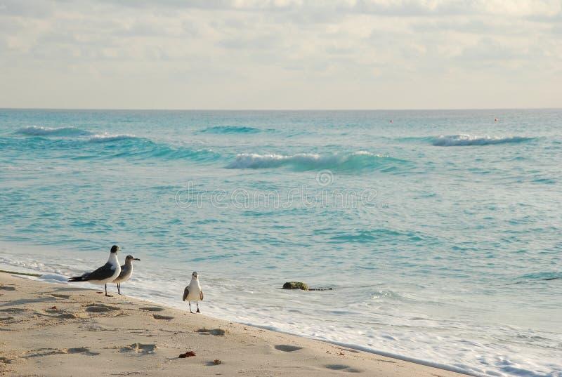 Le beau paysage de bord de la mer photographie stock