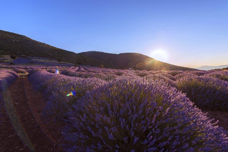 Le beau paysage de la lavande met en place au coucher du soleil d'été près de Kuy photographie stock