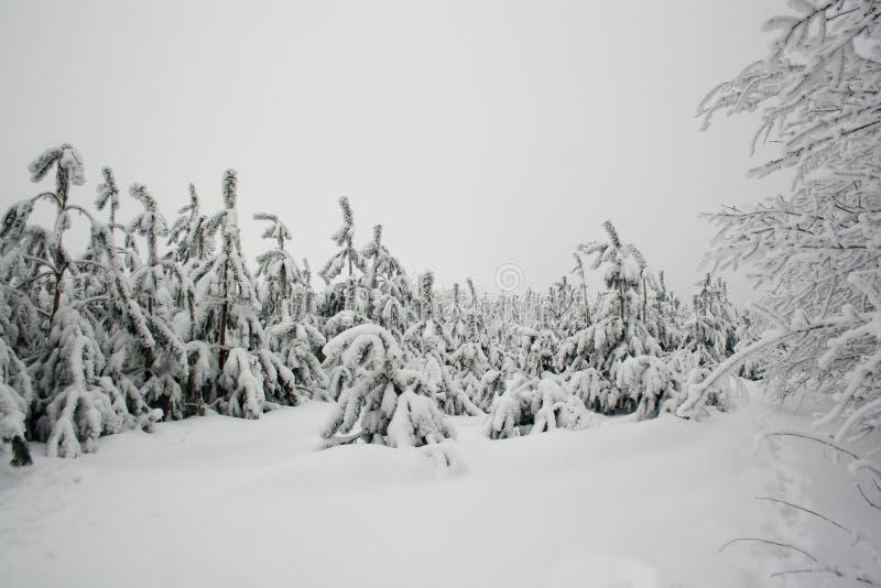 Le beau paysage de nature d'hiver, arbres a couvert la neige images stock