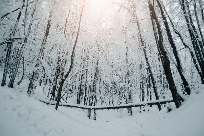 Le beau paysage de nature d'hiver, arbres a couvert la neige images libres de droits