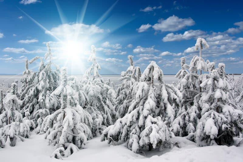 Le beau paysage de nature d'hiver, arbres a couvert la neige photographie stock libre de droits