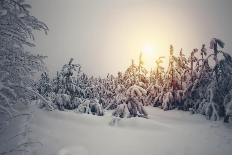 Le beau paysage de nature d'hiver, arbres a couvert la neige photographie stock