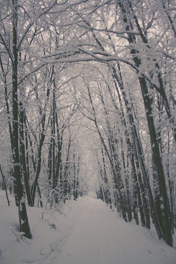 Le beau paysage de nature d'hiver, arbres a couvert la neige photos libres de droits