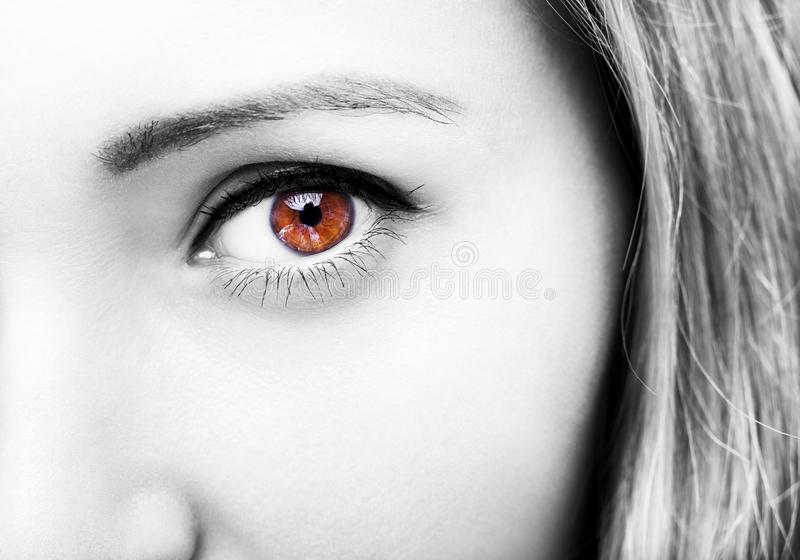Le beau ` perspicace s de femme de brun de regard observe photos libres de droits