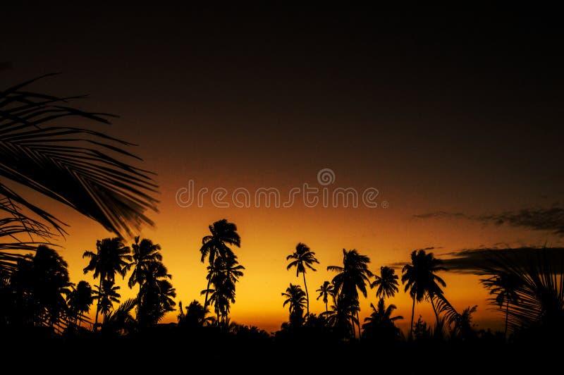 le beau plan d'ordinateur a produit des arbres réalistes d'arbre de coucher du soleil de photo de paume d'image images stock