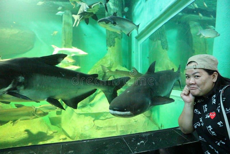 Le beau poisson d'eau douce dans l'aquarium nagent heureusement image stock