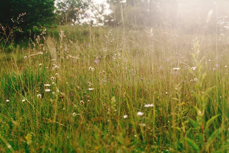 Le beau pré ensoleillé des wildflowers en soleil rayonne dans le moun d'été photos stock