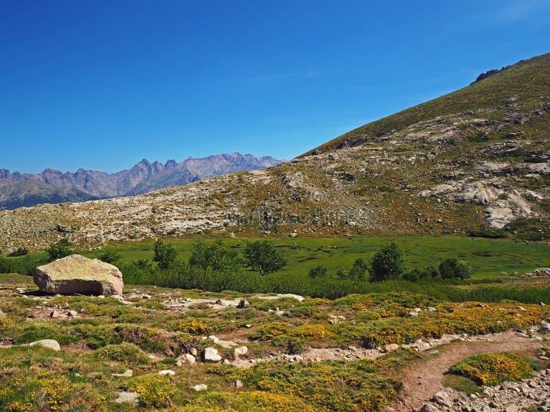 le beau pré vert de montagne avec le jaune fleurit la piscine d'eau photos stock
