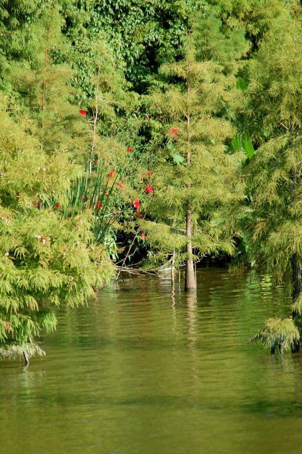 Le beau rivage d'un lac photographie stock
