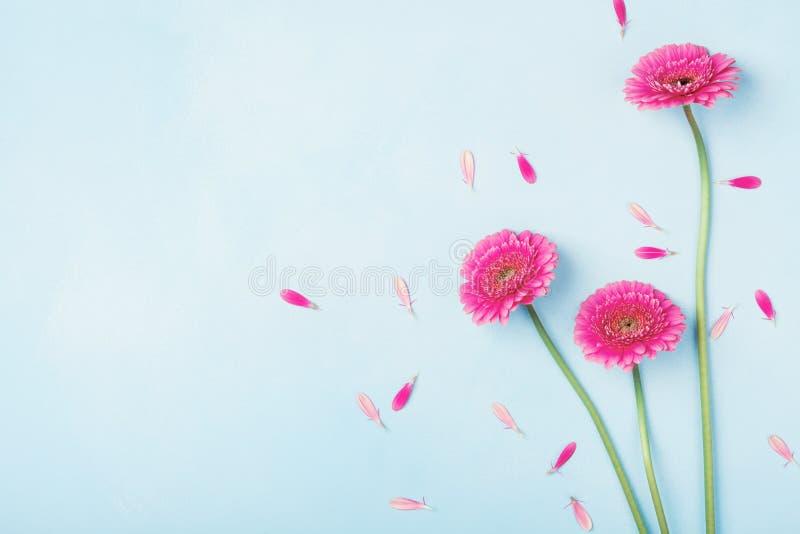 Le beau rose de ressort fleurit sur la vue supérieure en pastel bleue de table Cadre floral rose style plat de configuration image stock