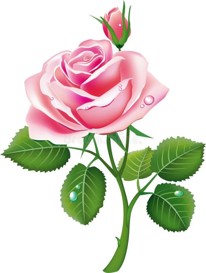Le beau rose a monté illustration de vecteur