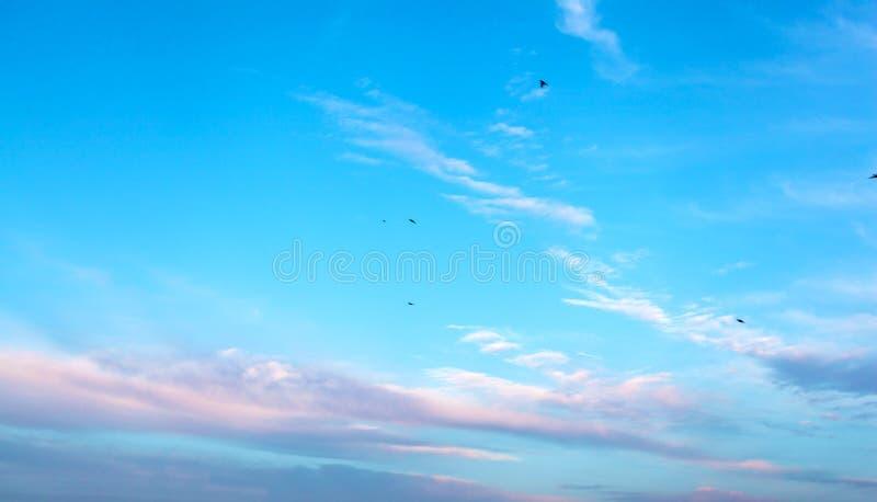 Le beau rose violacé opacifie au-dessus d'un fond bleu profond photographie stock