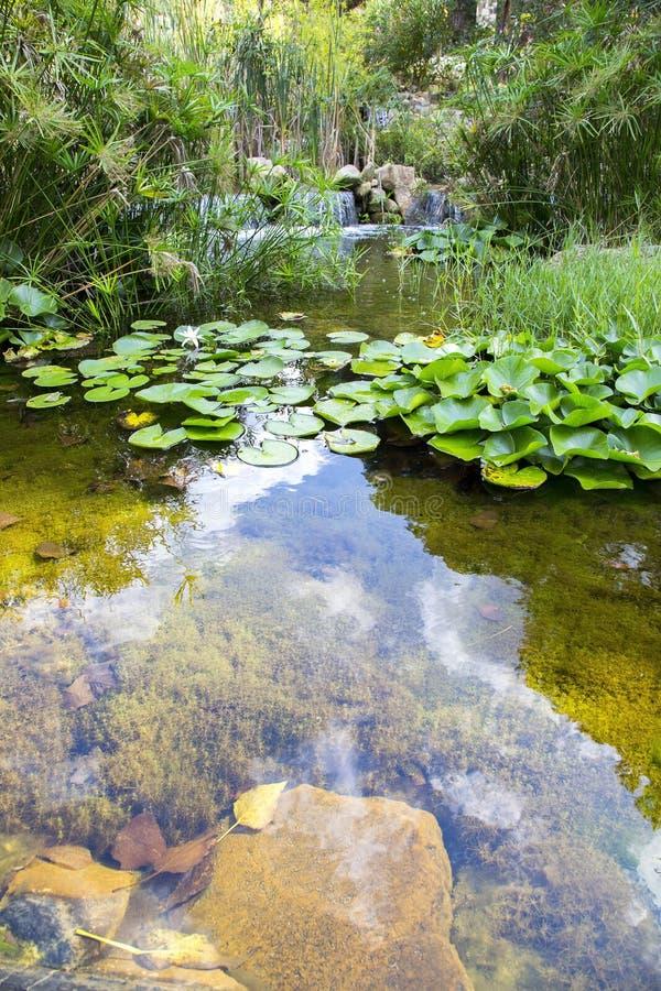 Le beau vert pousse des feuilles près de la cascade avec une réflexion de ciel photos stock