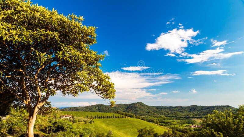 Le beau vignoble de Collio, Friuli Venezia-Giulia, Italie images stock