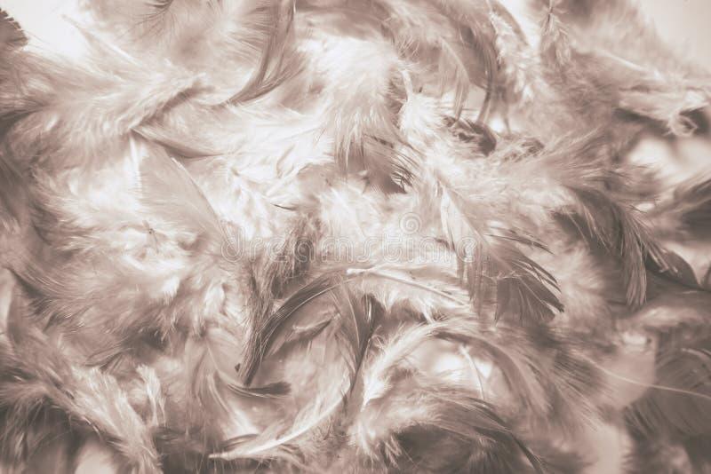 Le bel abr?g? sur plan rapproch? donne aux plumes une consistance rugueuse color?es fond et papier peint images libres de droits