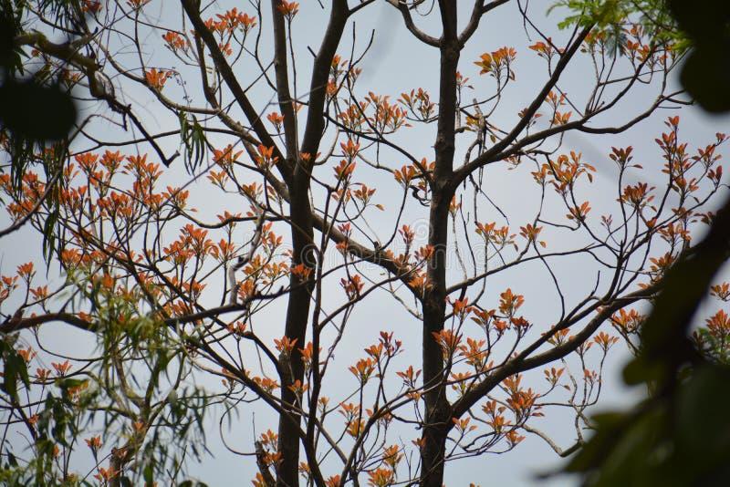 Le bel arbre avec la fleur rouge et orange images stock