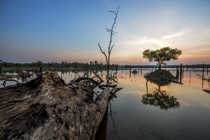 Le bel arbre mort dans le lac au temps crépusculaire images stock