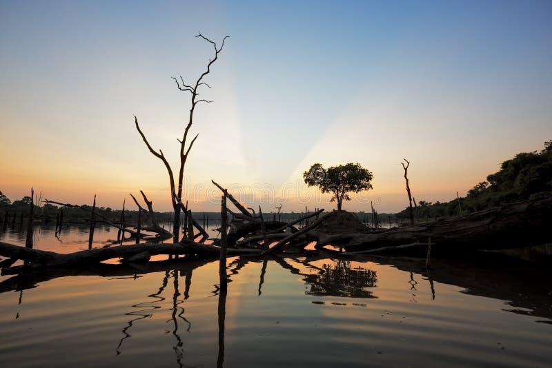 Le bel arbre mort dans le lac au temps crépusculaire images libres de droits
