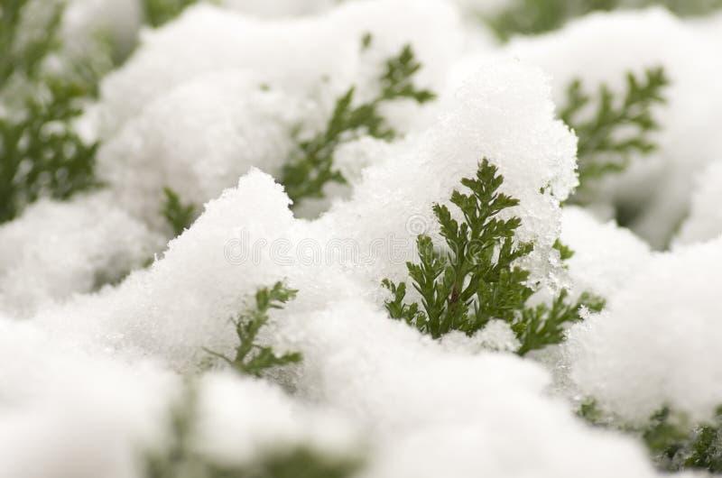 Le bel hiver avec la neige a couvert des usines photos libres de droits