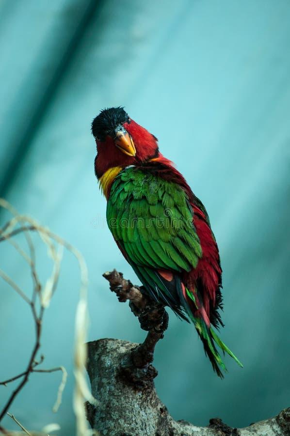 Le bel oiseau se repose sur l'arbre image stock