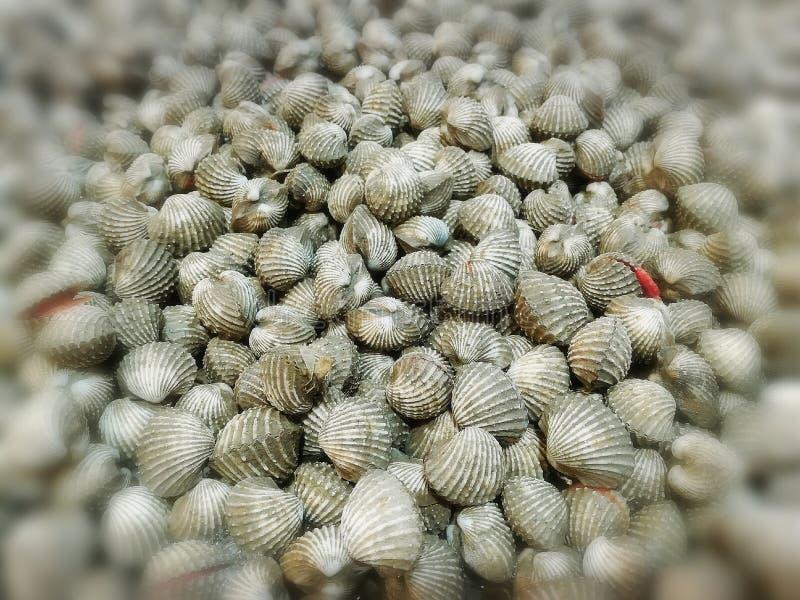 Le belle conchiglie e le feste naturali dei frutti di mare viaggiano immagine stock libera da diritti