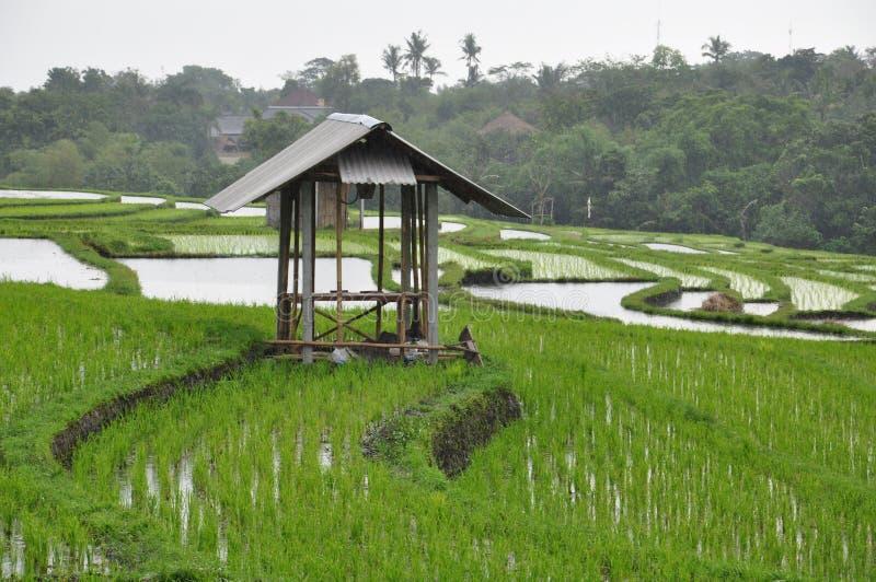 Le belle e risaie impressionanti Bali fotografia stock